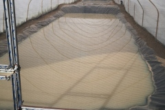 Our fish ponds
